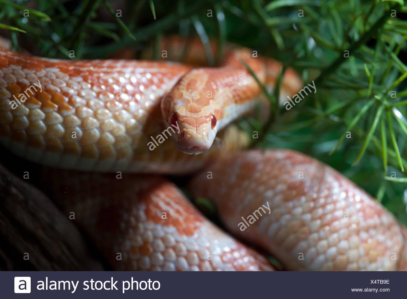 animals snake reptiles attitude design shaping formation shape model