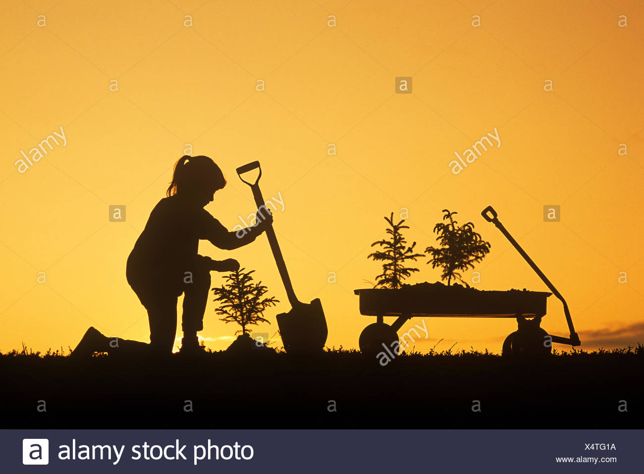a girl holding a shovel, examines a spruce tree she has just planted, Winnipeg, Manitoba, Canada Stock Photo
