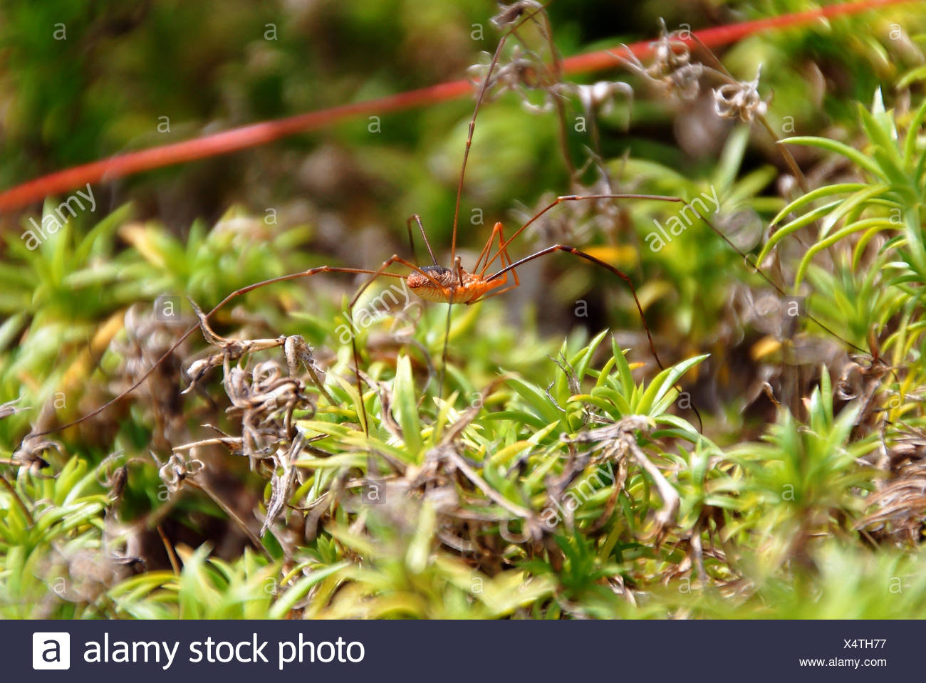 fodder, insect, spider, fly, doll, to gorge, engulf, devour, page, sheet, bee, - Stock Image