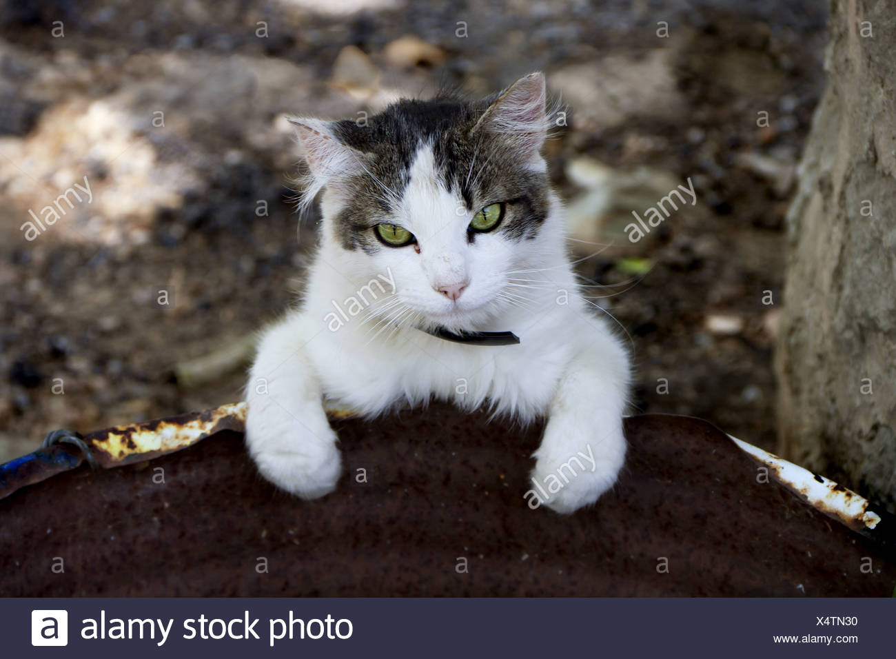 cat at expedition Stock Photo