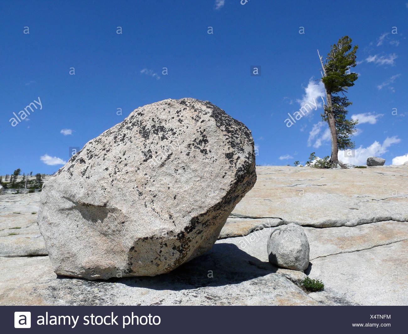 rock vs tree - Stock Image