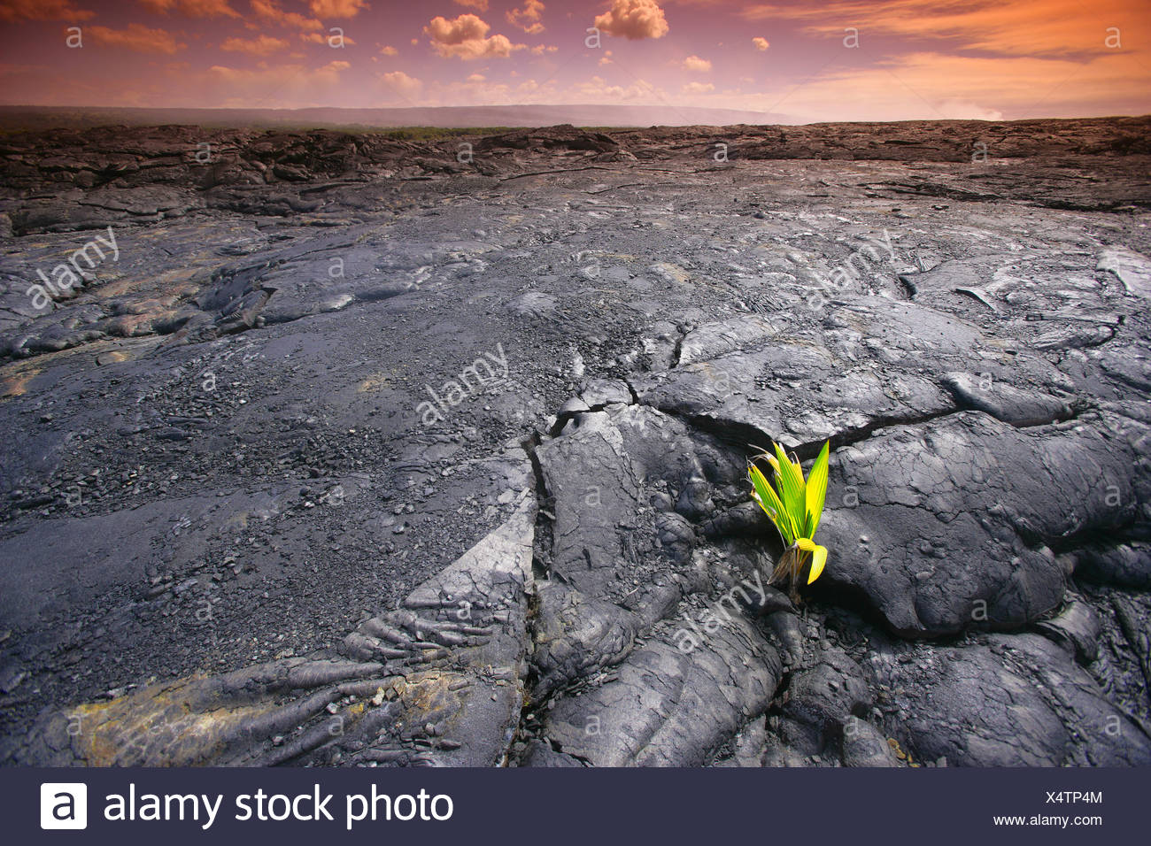 Lava rock with plant Stock Photo