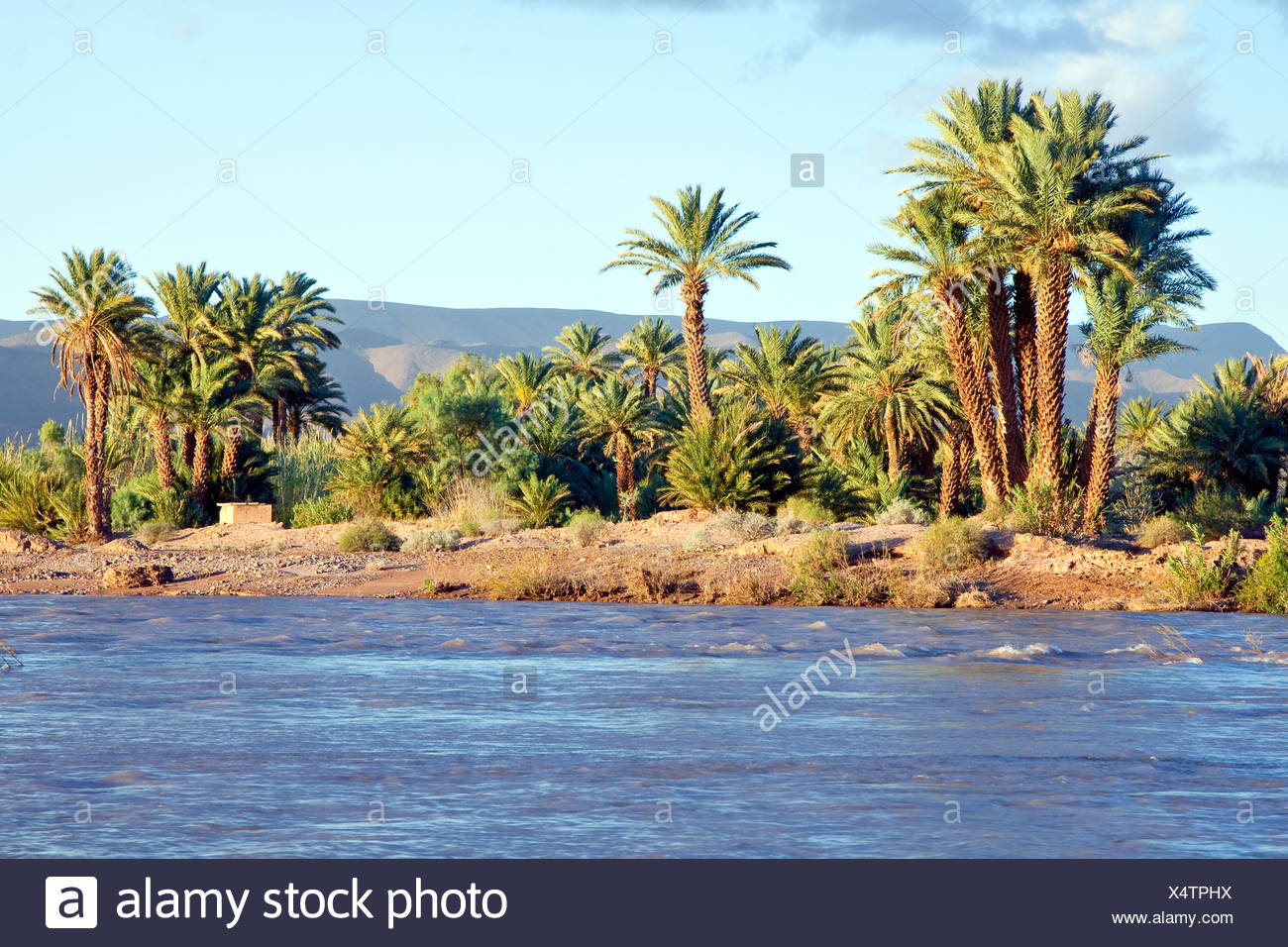 Palm trees on the riverbank of the Draa River, Draa valley, Agdz, Morocco, Africa - Stock Image