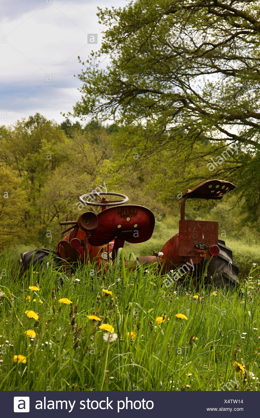 Rusty old Massey Ferguson tractor abandoned in long grass with dandelion flowers. - Stock Image
