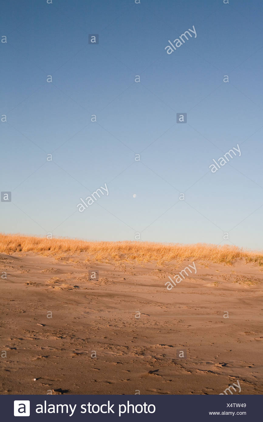 Seagrass and sand dunes - Stock Image