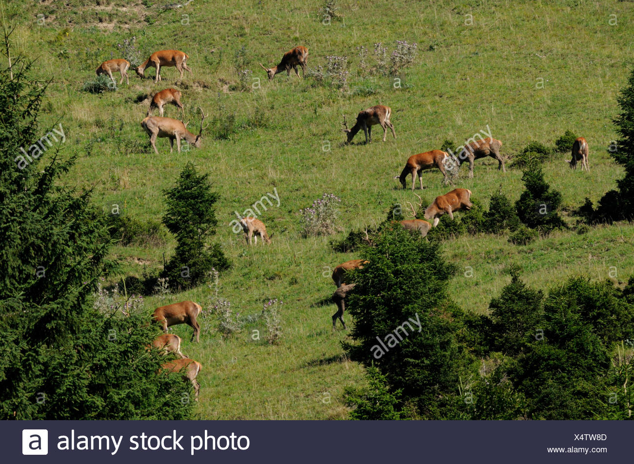 on the evening pasture Stock Photo