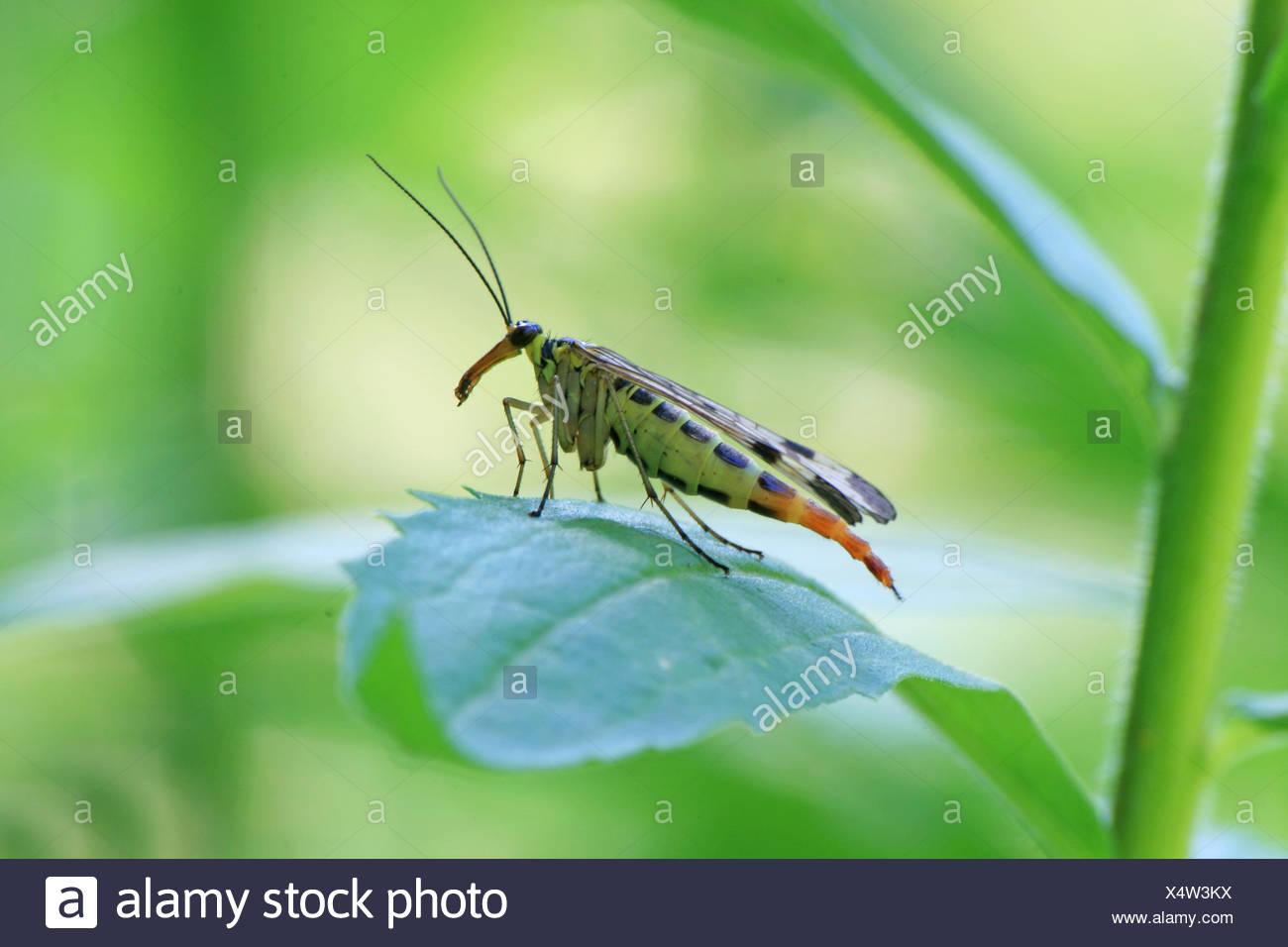 macro, close-up, macro admission, close up view, animal, insect, macro, - Stock Image