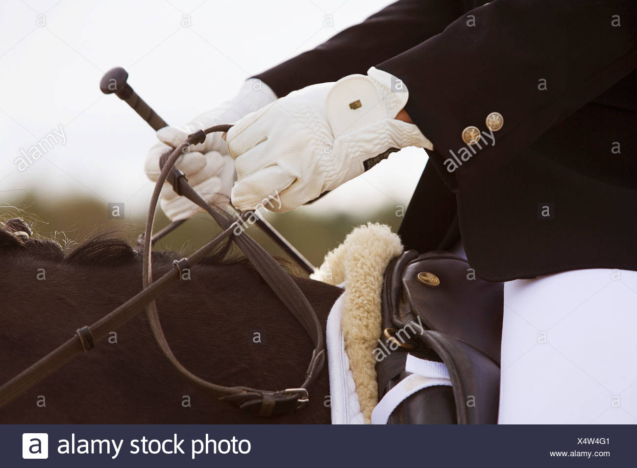 close-up of dressage horse with rider - Stock Image