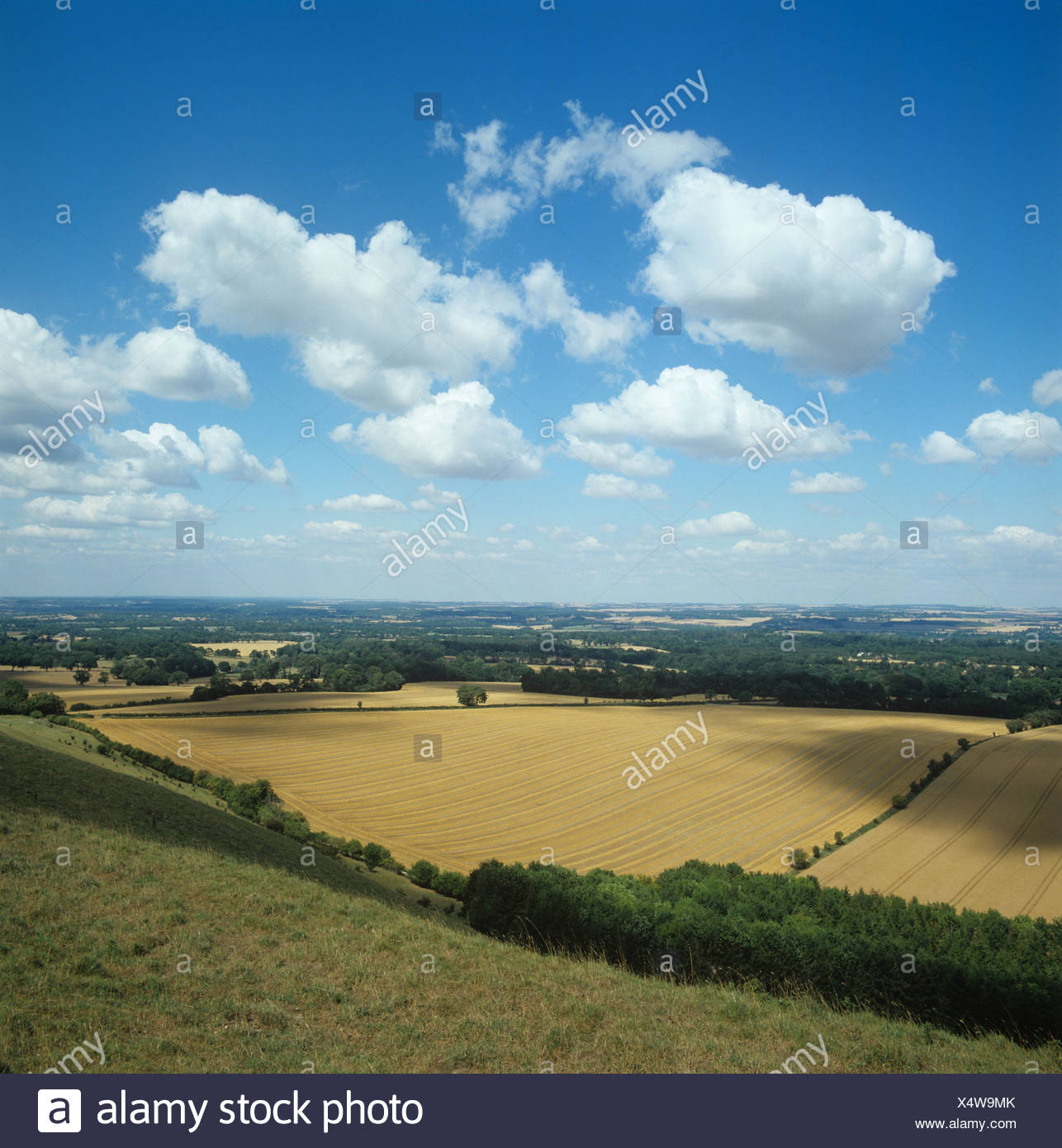 High downland view of ripe cereal fields near Inkpen in Berkshire on a fine summer day - Stock Image