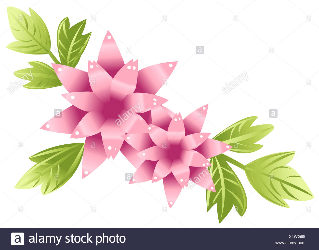 Lotus Flower Wallpaper Cut Out Stock Images Pictures