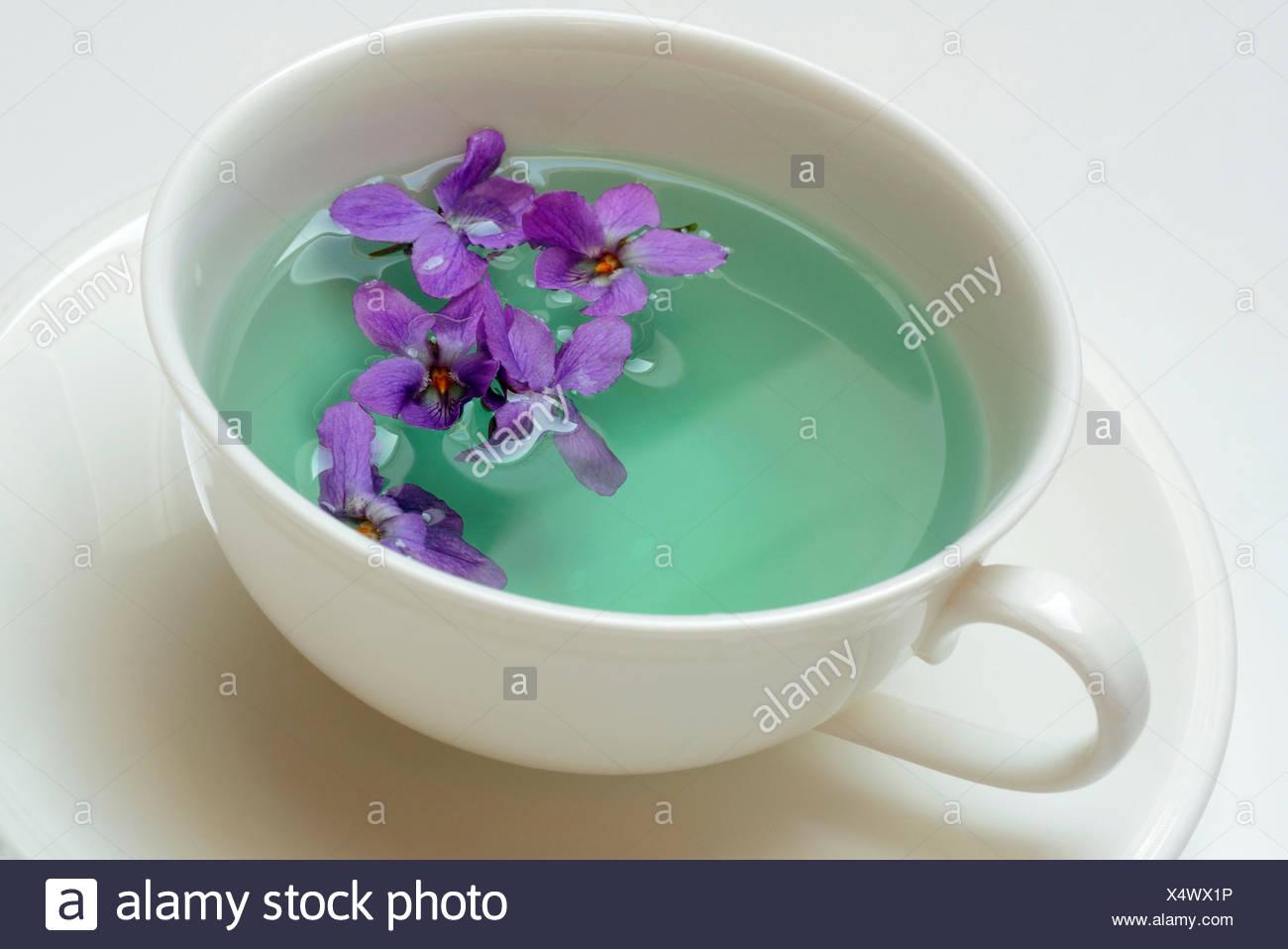 Violet tea / (Viola odorata) - Stock Image