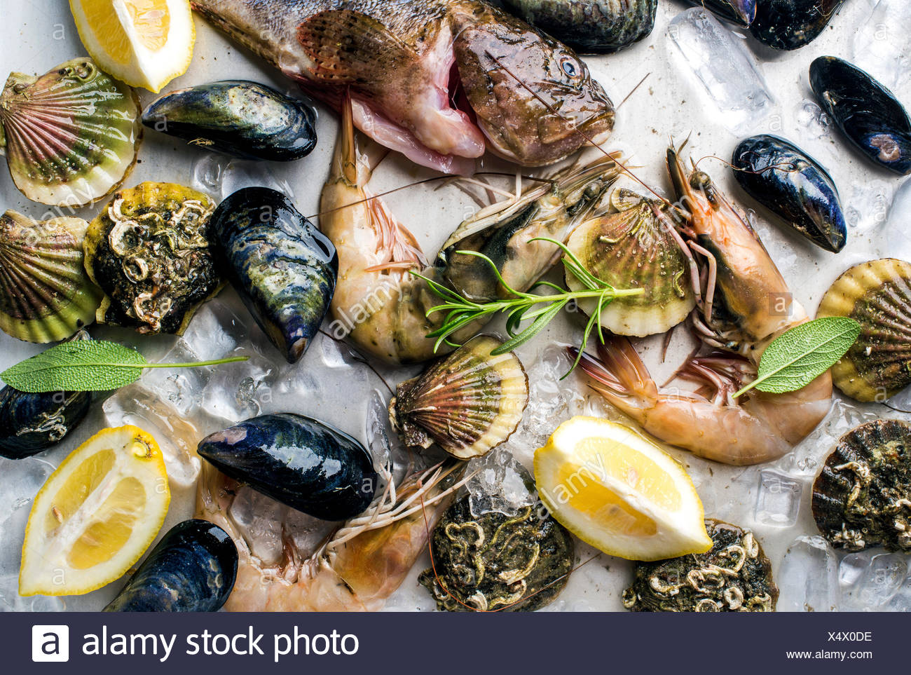 Fresh seafood with herbs and lemon slices on ice. Prawns, fish, mussels and scallops over steel metal background, top view - Stock Image