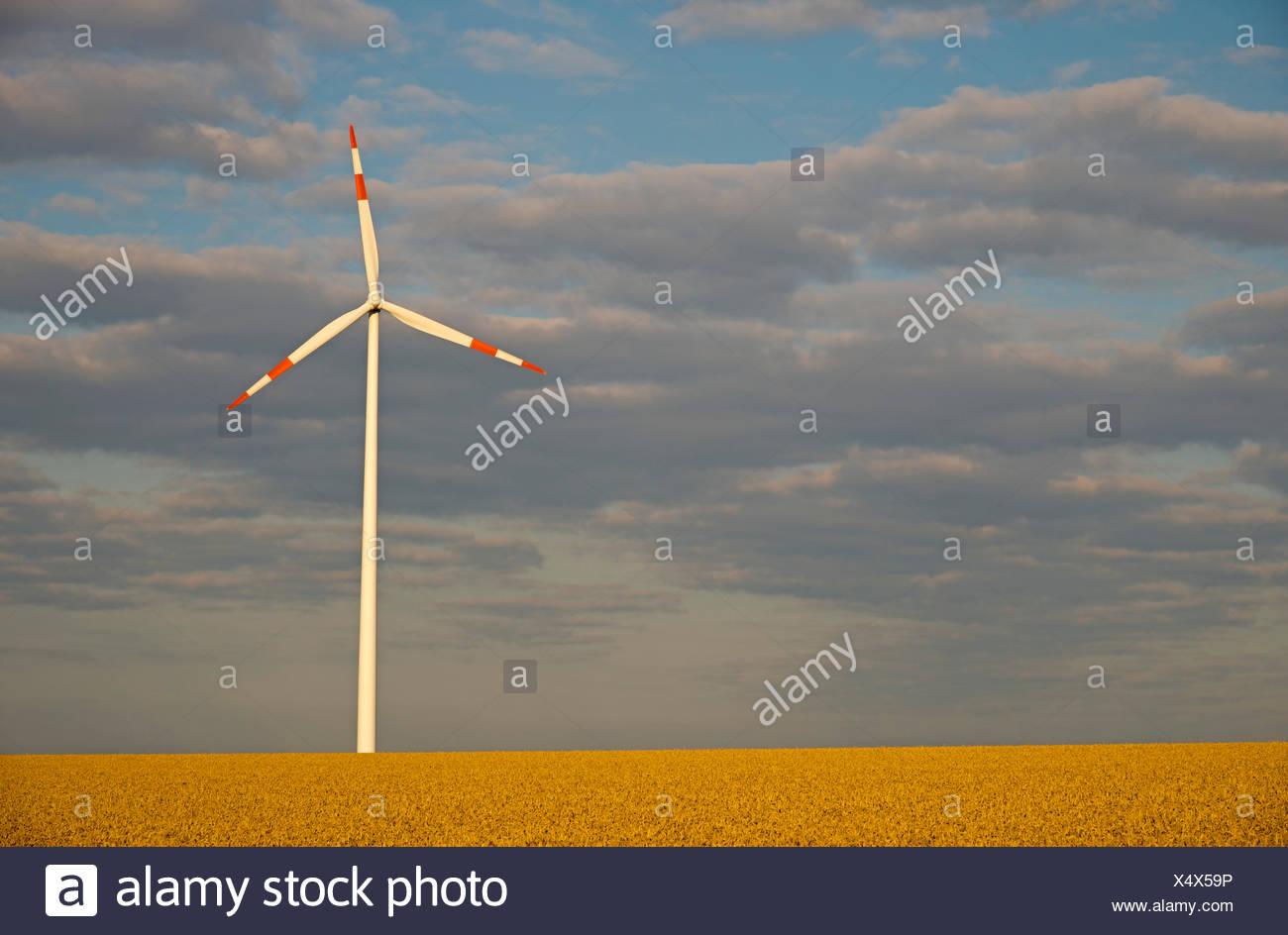 wind wheel in a ripe corn field, Germany, Baden-Wuerttemberg, Swabian Alb, Tomerdingen - Stock Image