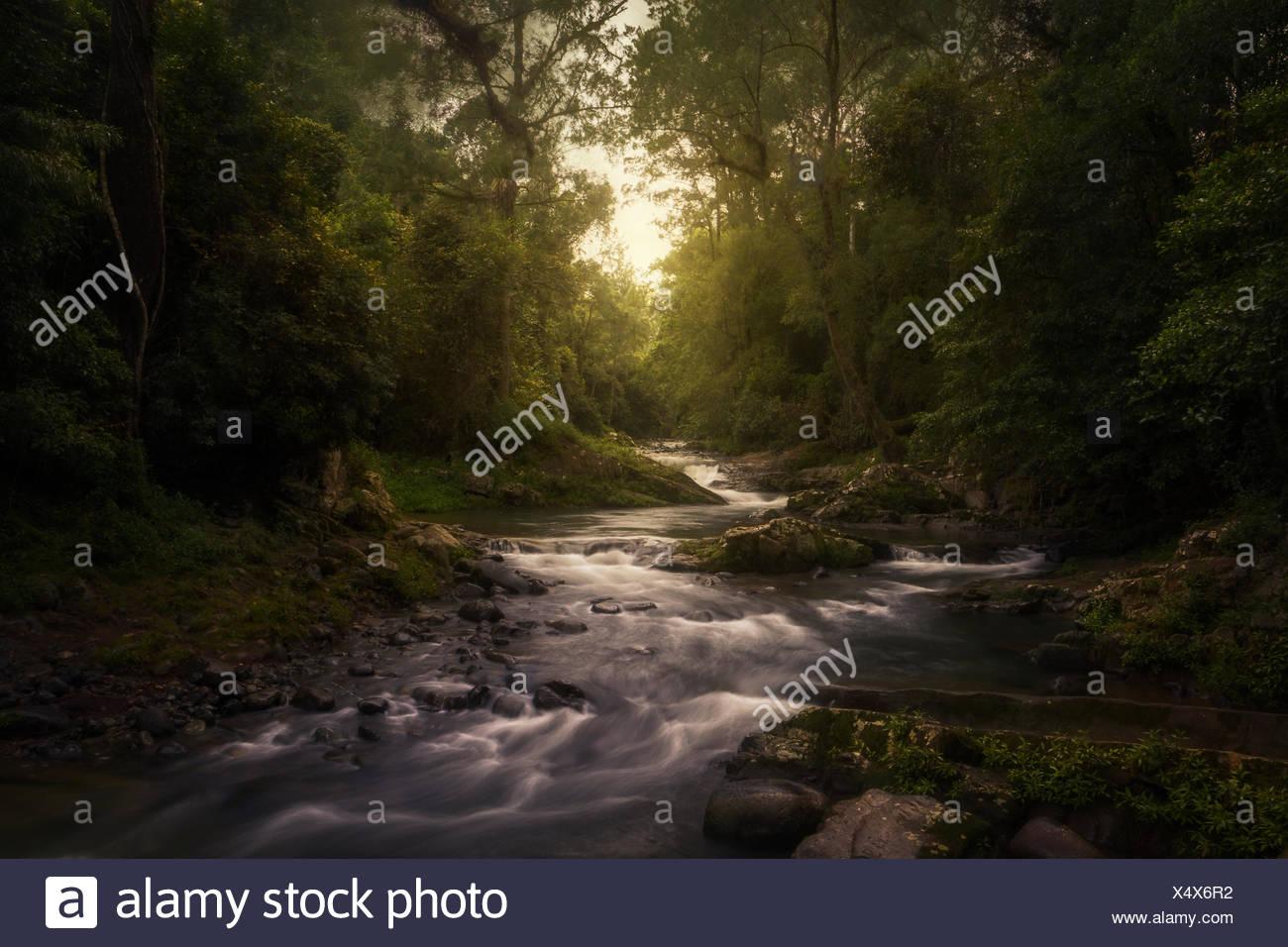 Stream in rainforest, Barrington Tops, New South Wales, Australia - Stock Image