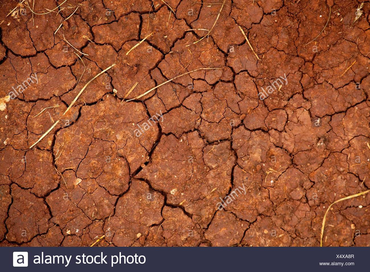 Dried out soil texture closep - Stock Image