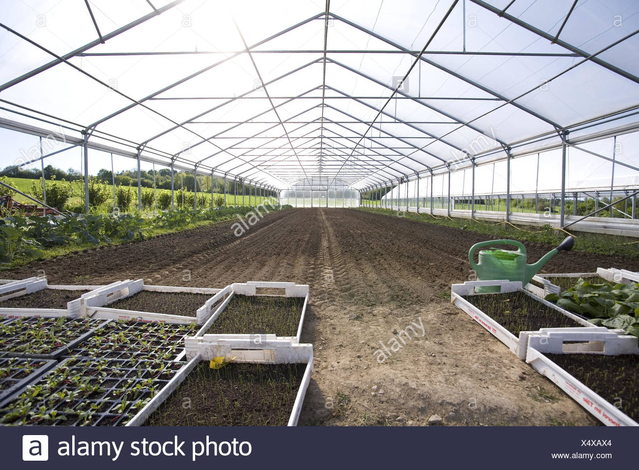 Greenhouse, inside, hothouse, market garden, cultivation, cultivation, plants, vegetables, vegetable plants, the sun, growth, brightly, sunny, flooded with light, protected, greenhouse, roofs, watering can, solar irradiation, Setzlinge, cast, grow, - Stock Image
