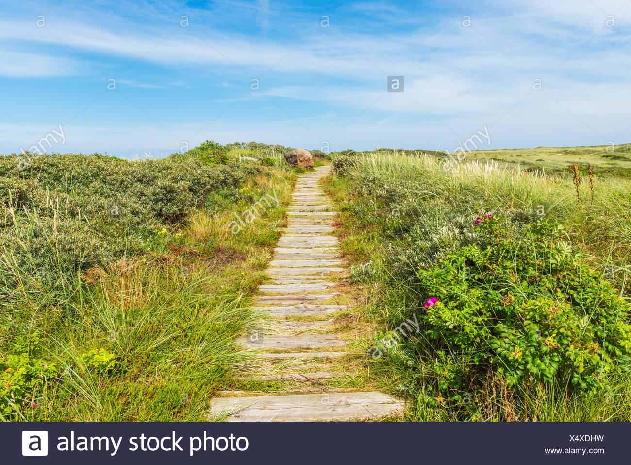 Wooden Planks Path Dune Landscape, Thyborøn, Midtjylland, Denmark - Stock Image