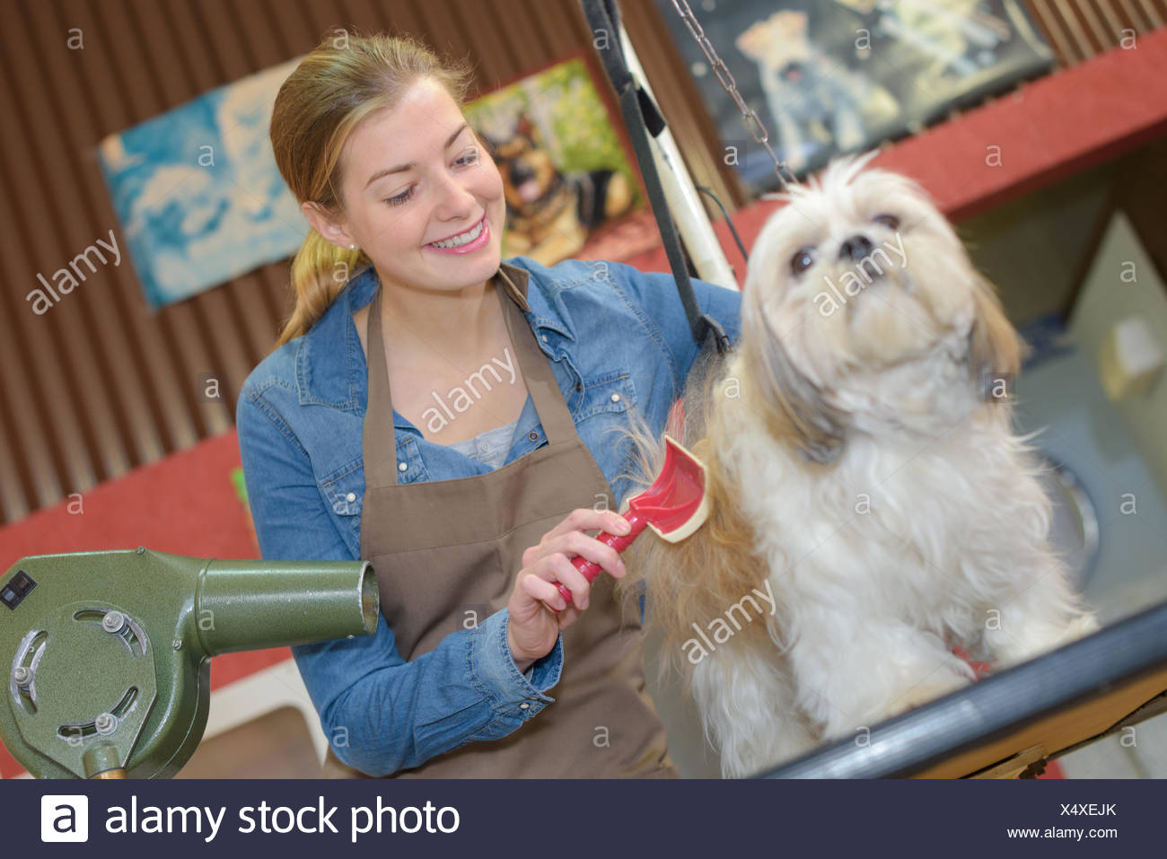 beauty parlour for dogs Stock Photo: 278406763 - Alamy