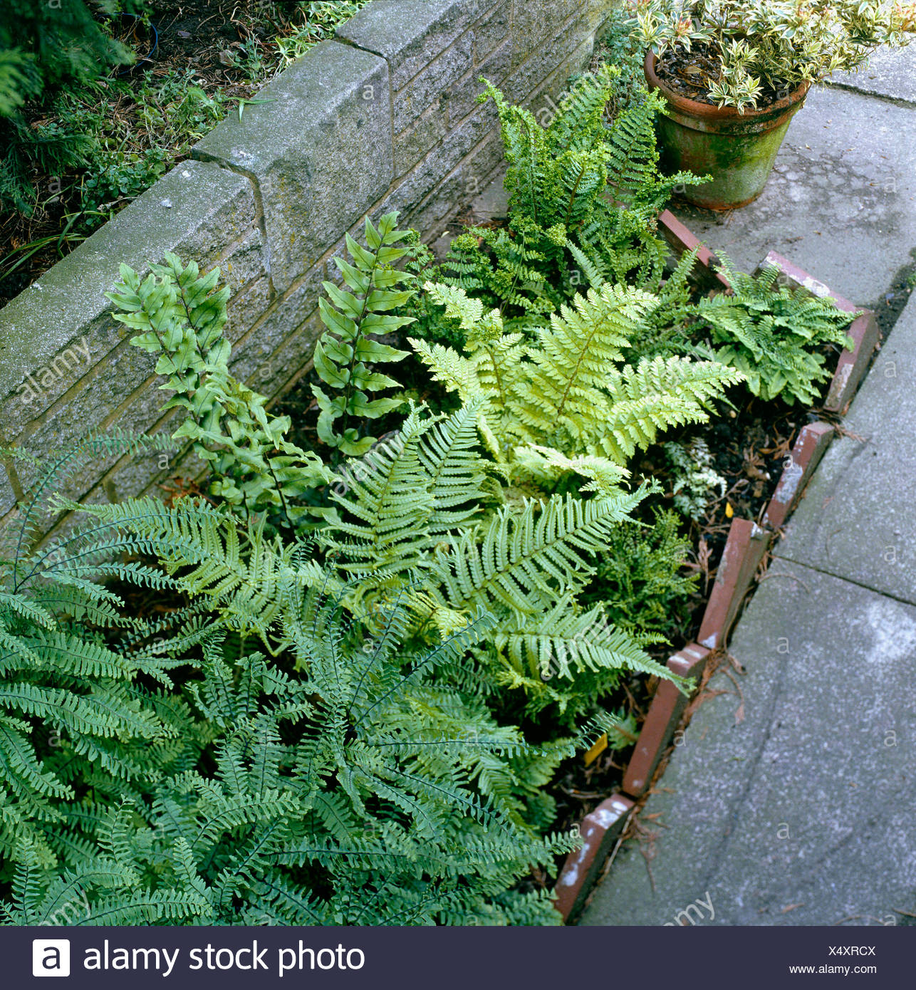 Shade Garden   With Ferns Planted In Enclosed Bed. SHG015445 ...