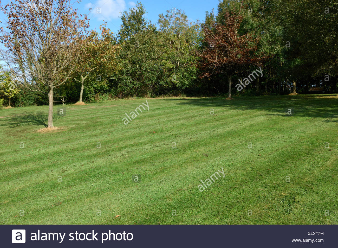 Rough lawn with fine mulch after mowing with a rotary mulching mower in autumn - Stock Image