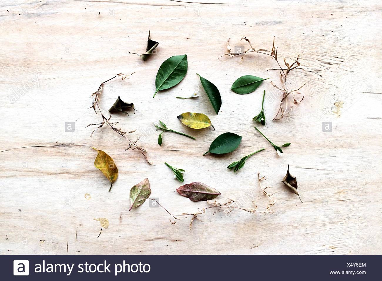 Collection Of Leaves - Stock Image