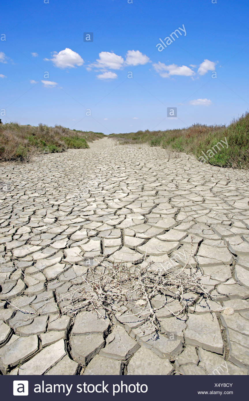 Parched ground, Camargue, Provence, Southern France, France, Europe - Stock Image