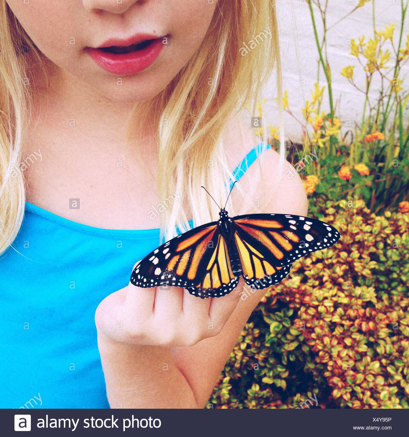 Girl looking at newly hatched monarch butterfly - Stock Image