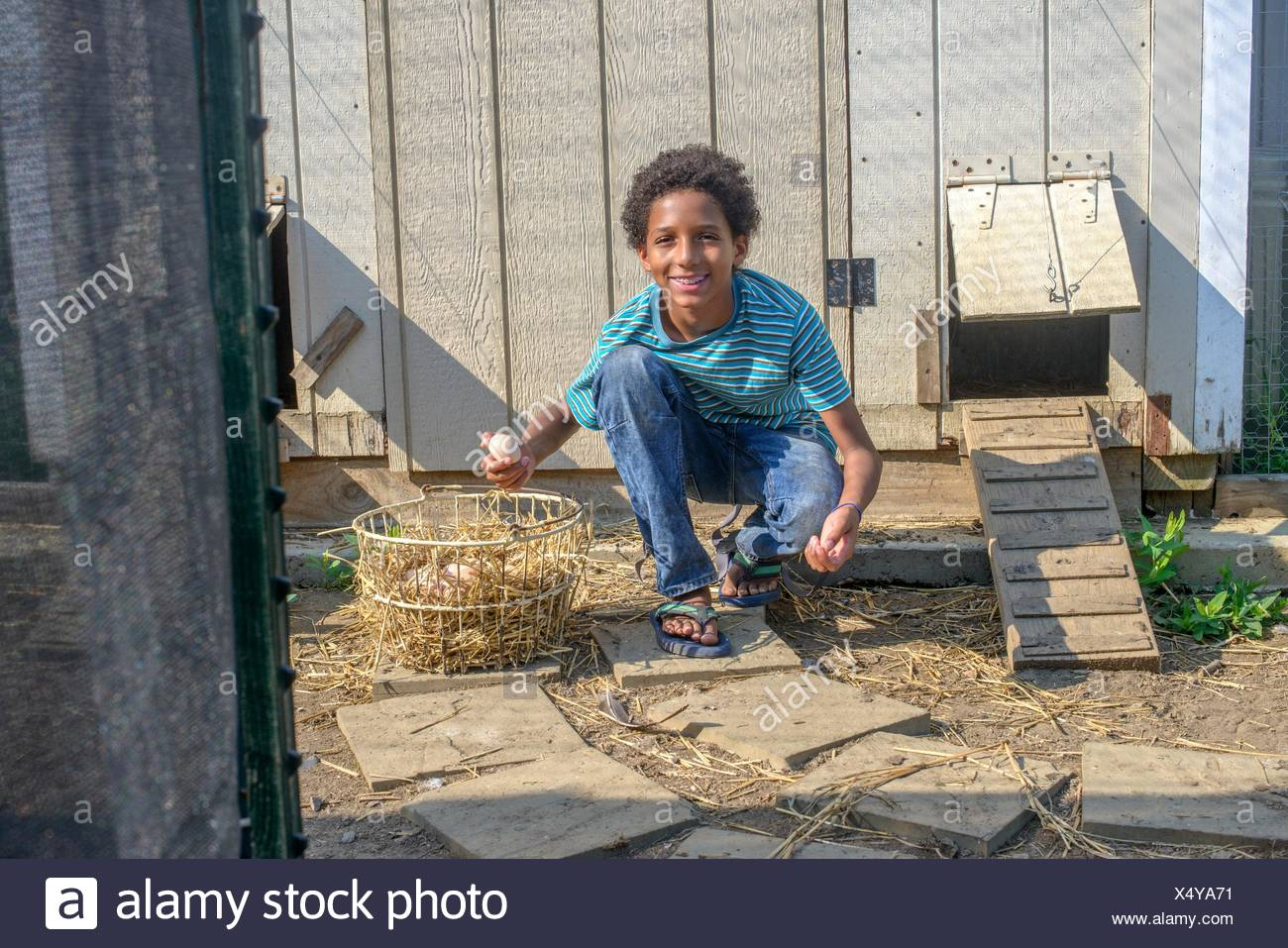 Portrait of boy in hen house collecting eggs - Stock Image