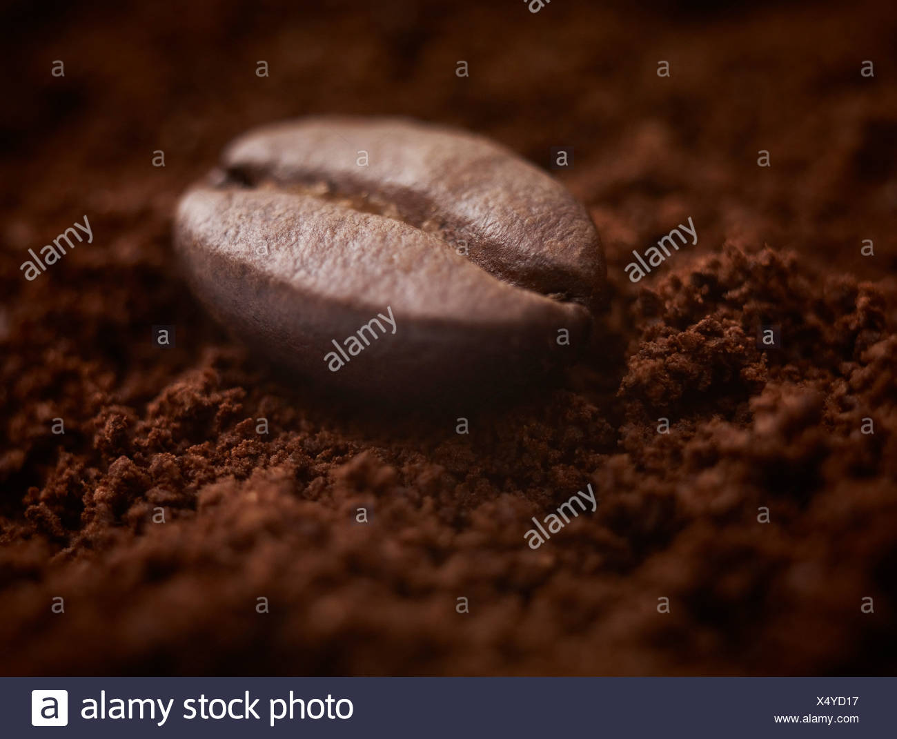 Close up of coffee bean on ground coffee - Stock Image