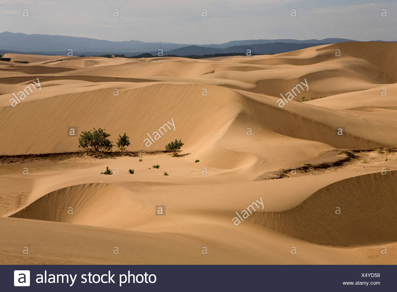 Desert sands, Paraguaná Peninsula, Falcón, Venezuela, South America - Stock Image