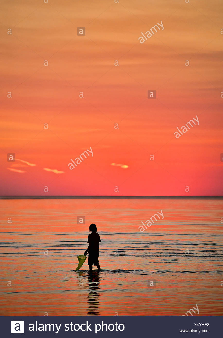 Boy explores the shallow waters with a fishing net. Cape Cod, MA, Massachusetts - Stock Image