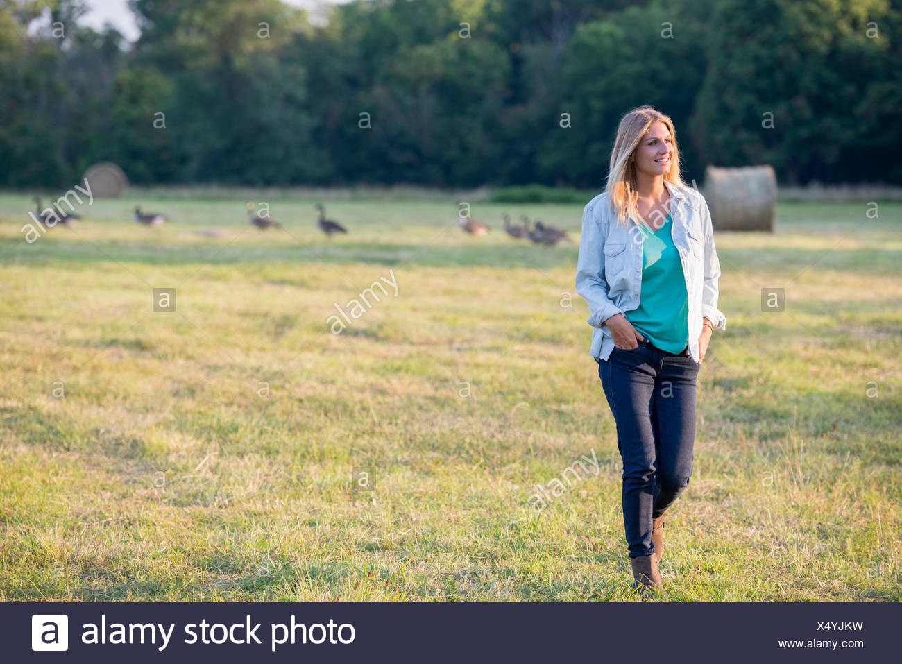 A woman walking across a field, away from a flock of geese outdoors in the fresh air. - Stock Image