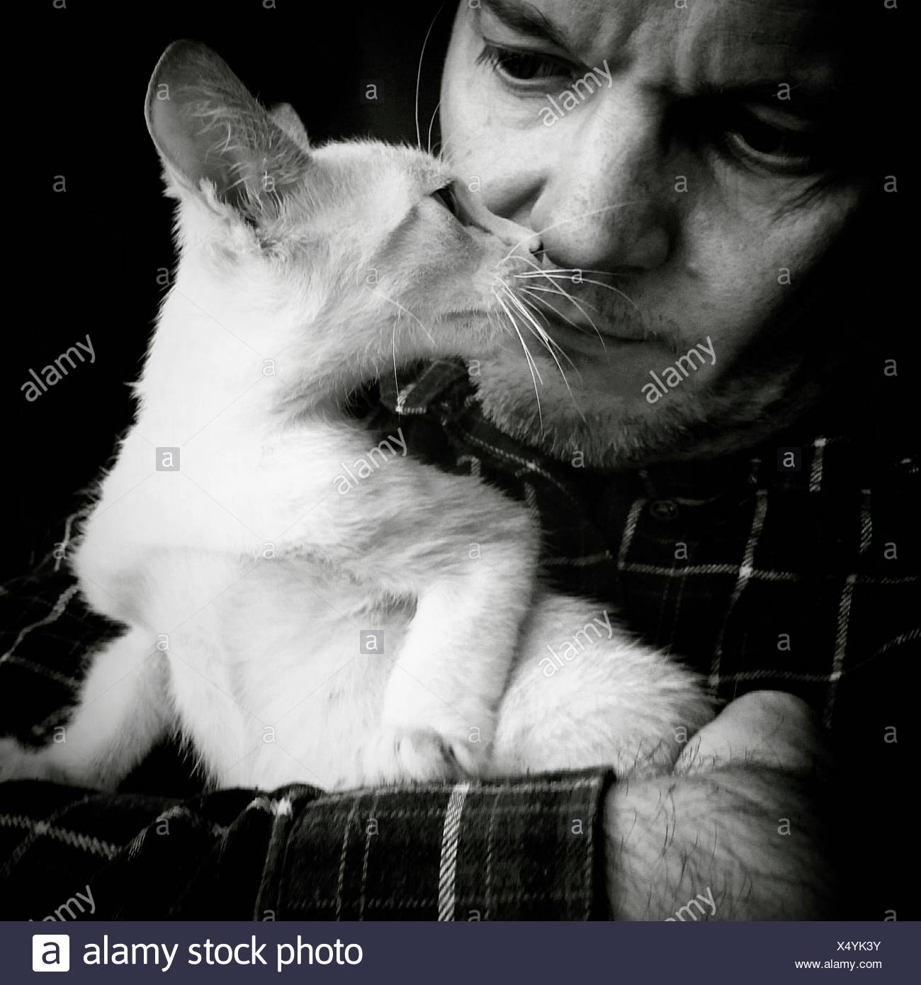Man Holding While Staring White Cat - Stock Image