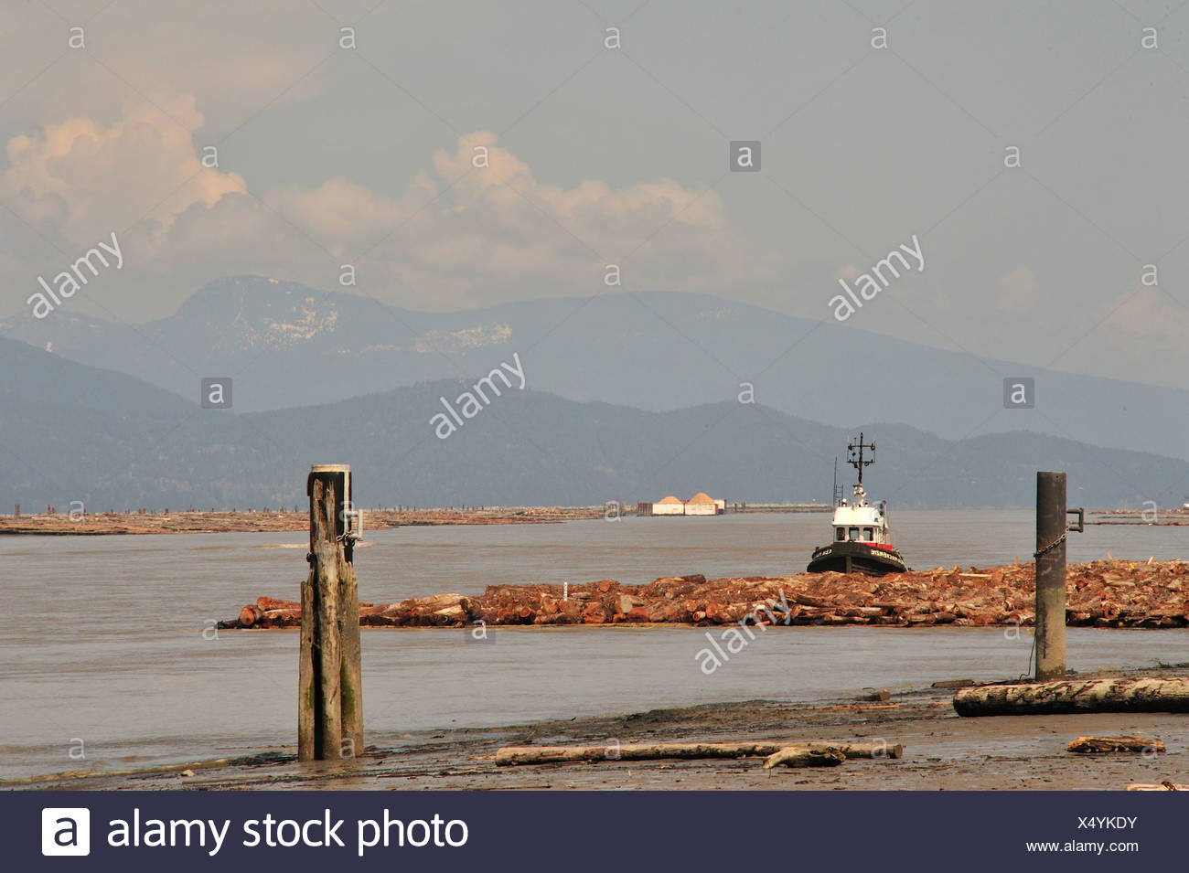 tug boat moored to log boom on north arm of Fraser River. Iona Beach with view of Coast Range, Richmond, British Columbia Canada - Stock Image