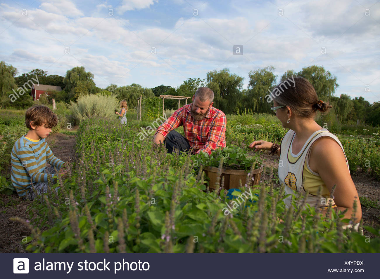 Family working together on herb farm - Stock Image