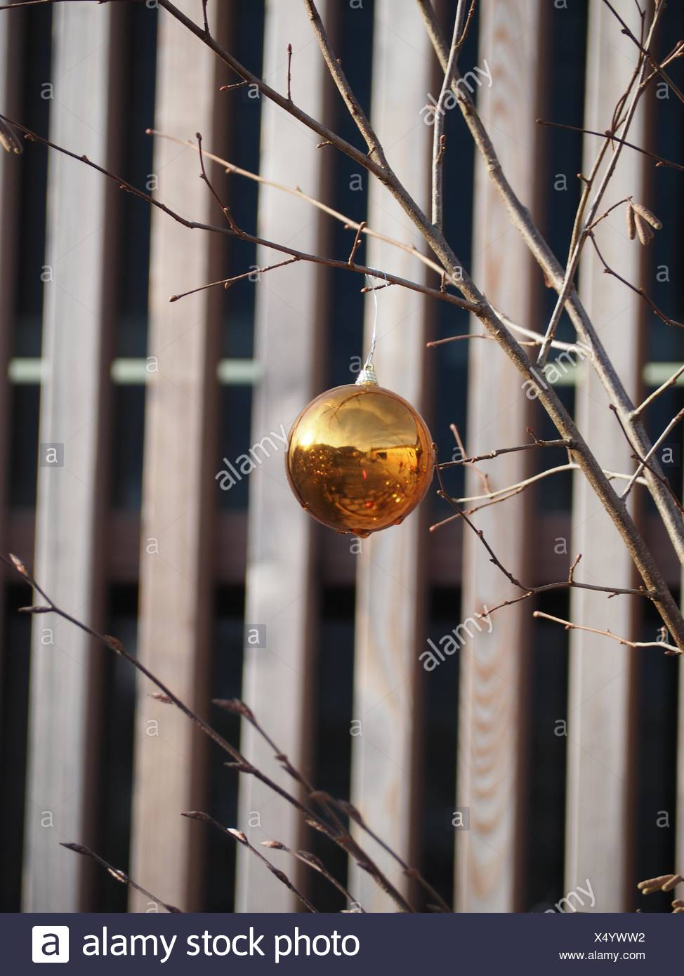 Close-Up Of Decoration Hanging On Dried Plant Against Fence - Stock Image