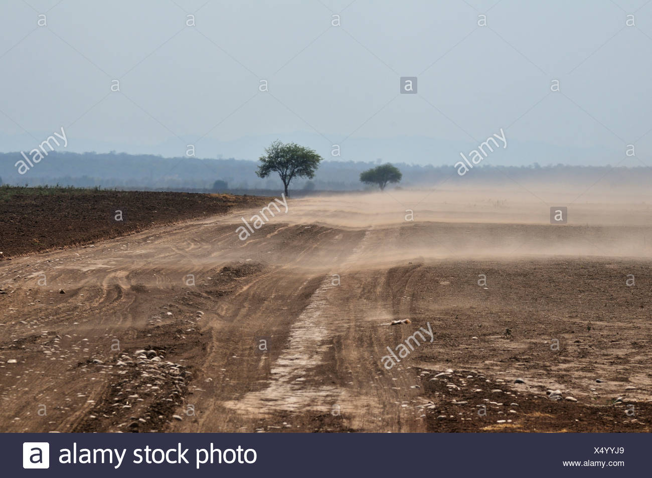 Erosion, the wind disperses the nutrient-rich soils from the cleared areas, Gran Chaco, Salta province, Argentina, South America - Stock Image