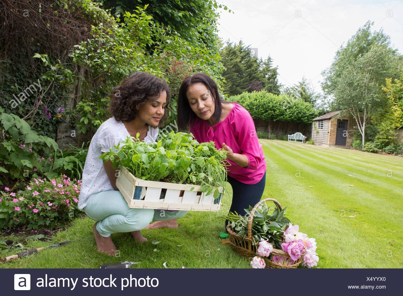 Mother and grown daughter, picking herbs in garden - Stock Image
