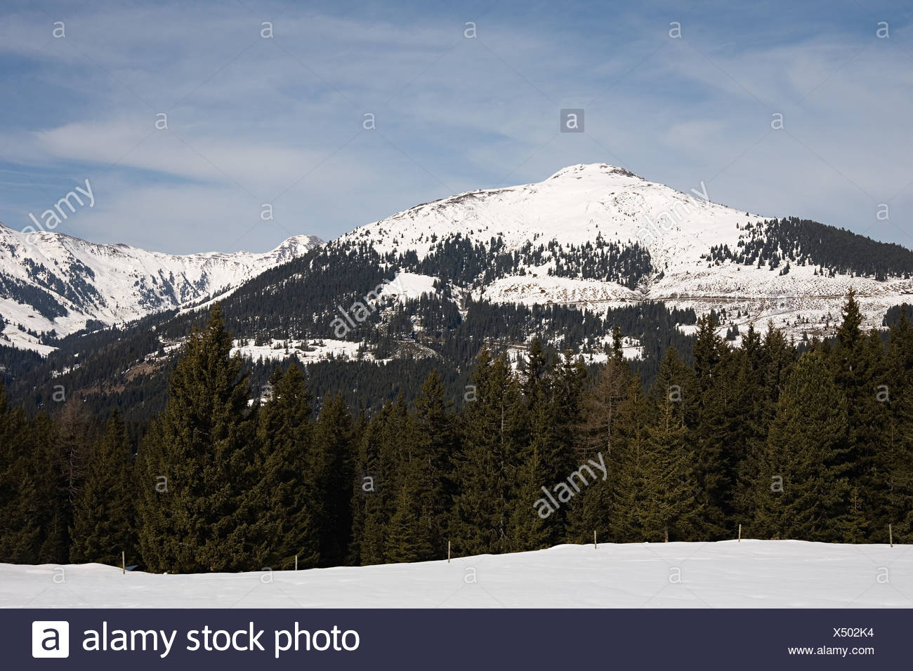 Mountain and fir trees - Stock Image