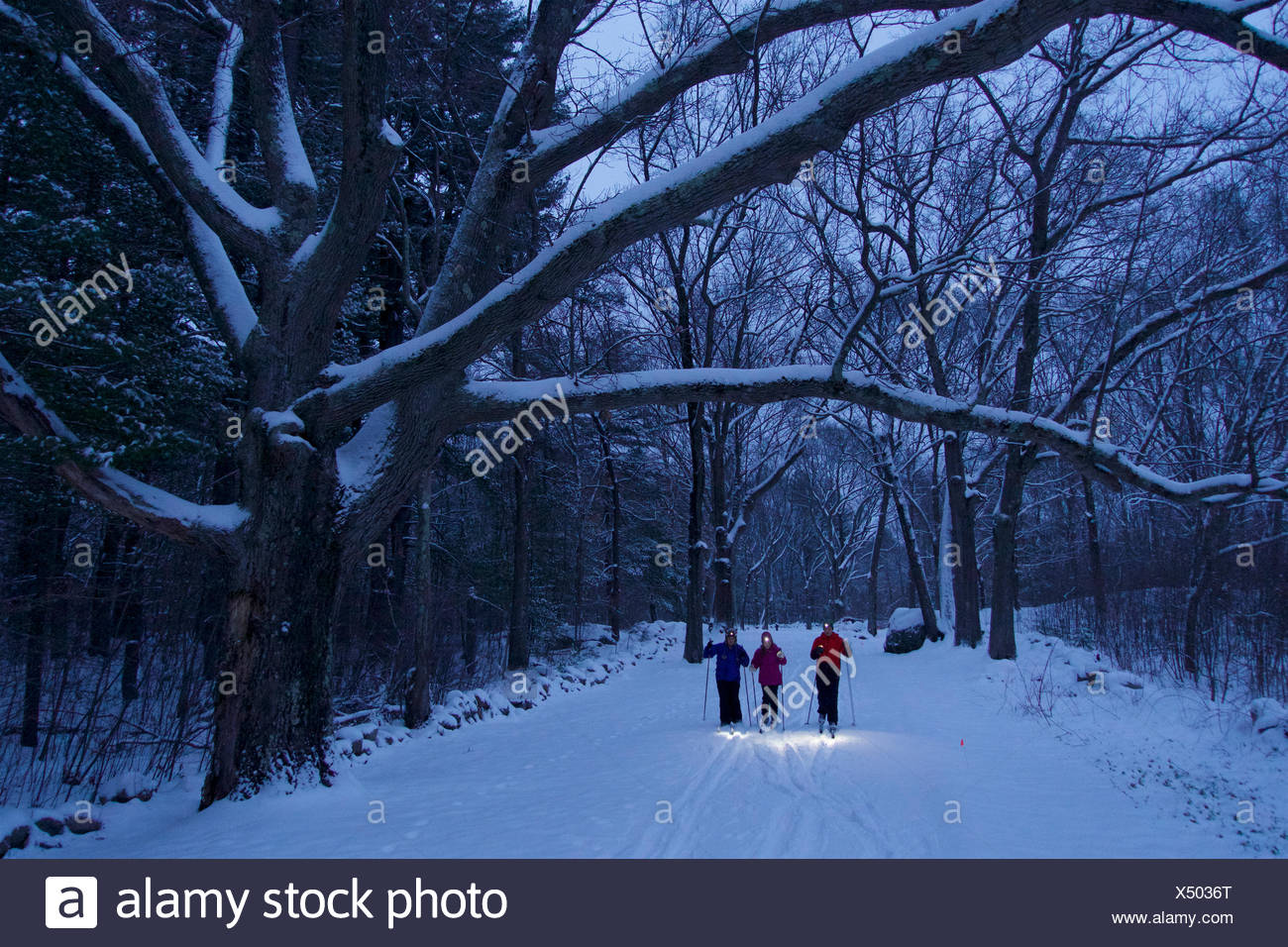 A woman and her teen daughter and son cross-country ski beneath fresh snow covered trees in twilight with headlamps on. - Stock Image
