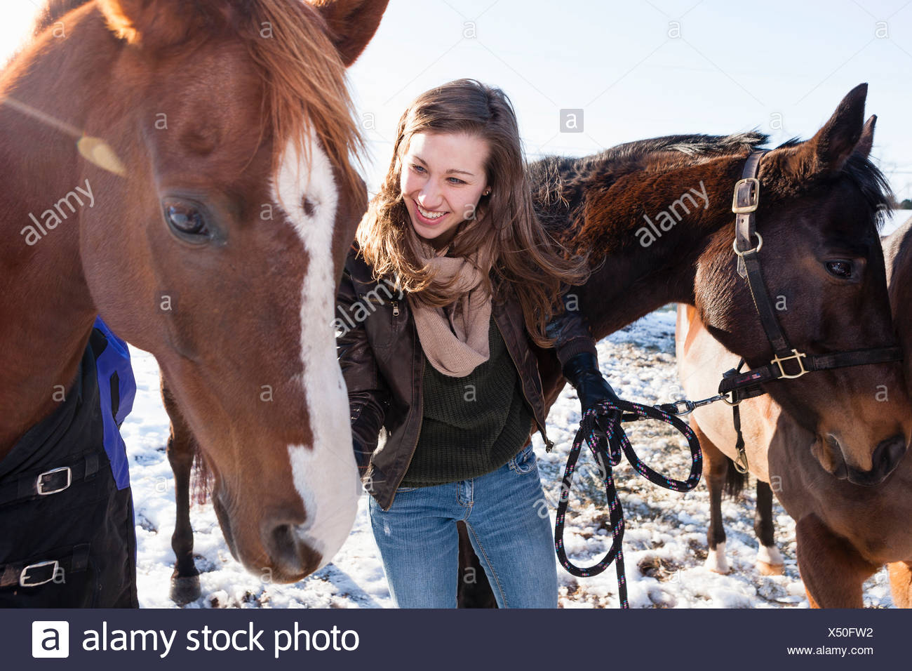 Young woman with horses in winter field - Stock Image