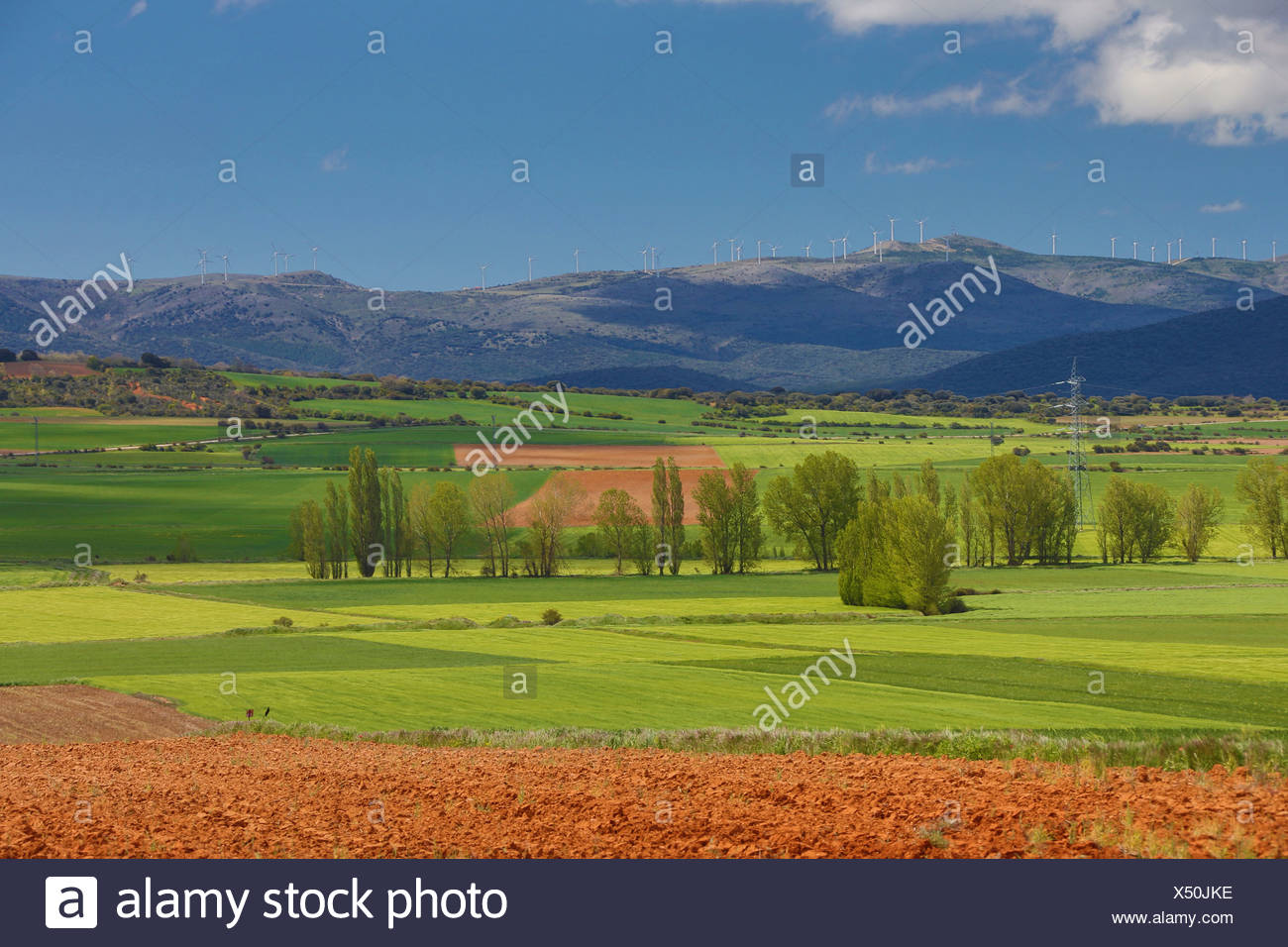 Aragon, colourful, countryside, earth, landscape, nature, purple, red, soria, Spain, Europe, spring, agriculture, field, - Stock Image