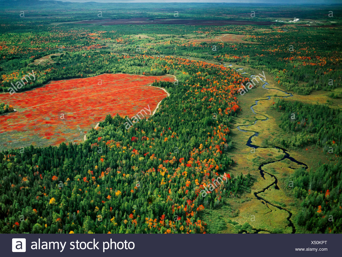Agriculture - Aerial view of a lowbush blueberry field (barrens) in Autumn / Maine, USA. - Stock Image