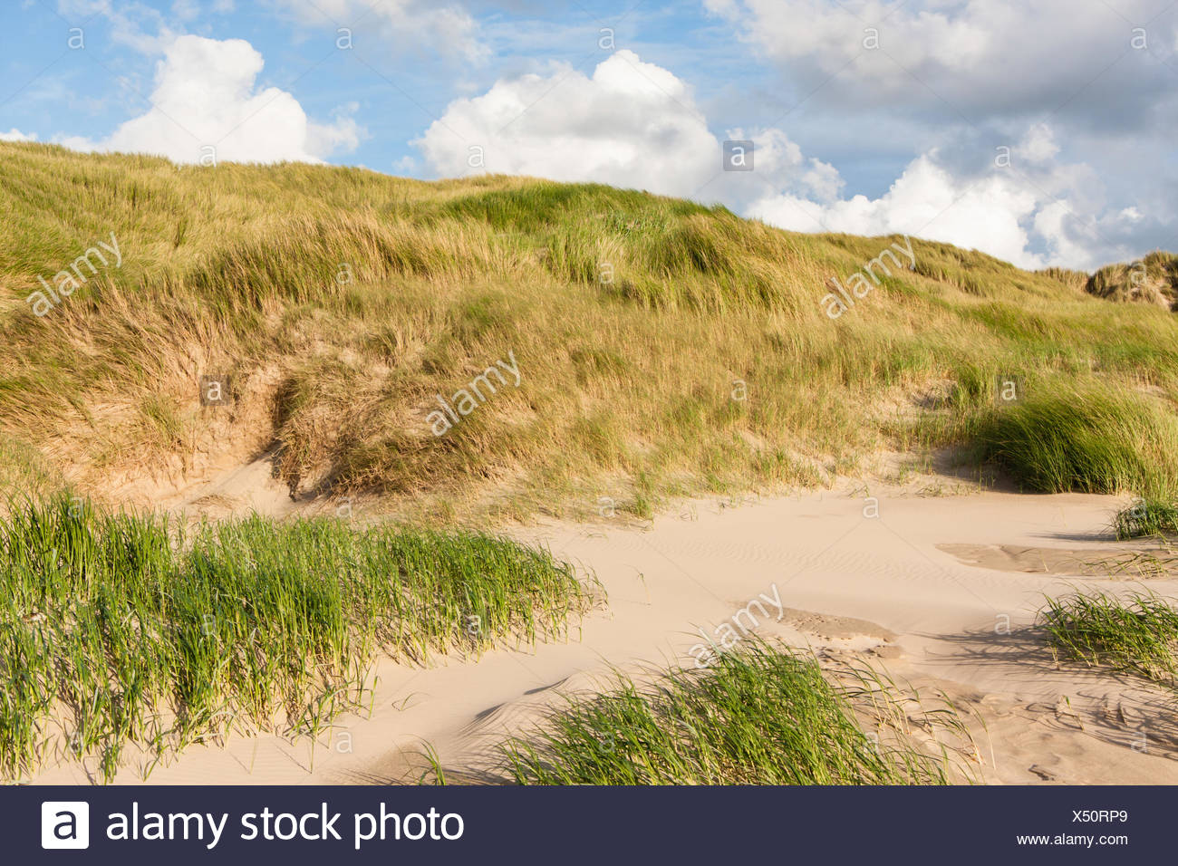 dunes at the north sea - Stock Image