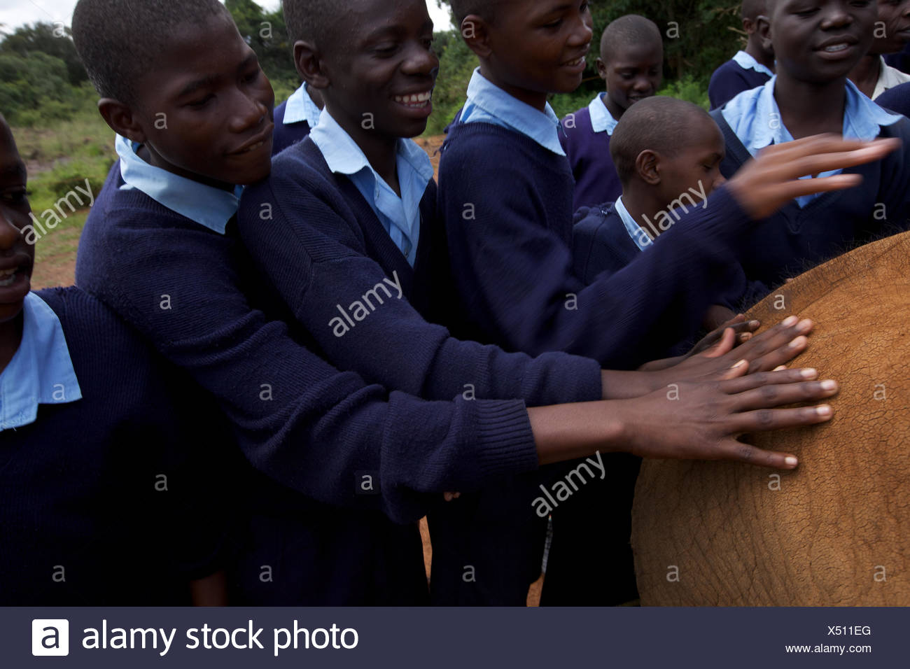 An elephant orphan is touched by visiting schoolchildren. - Stock Image