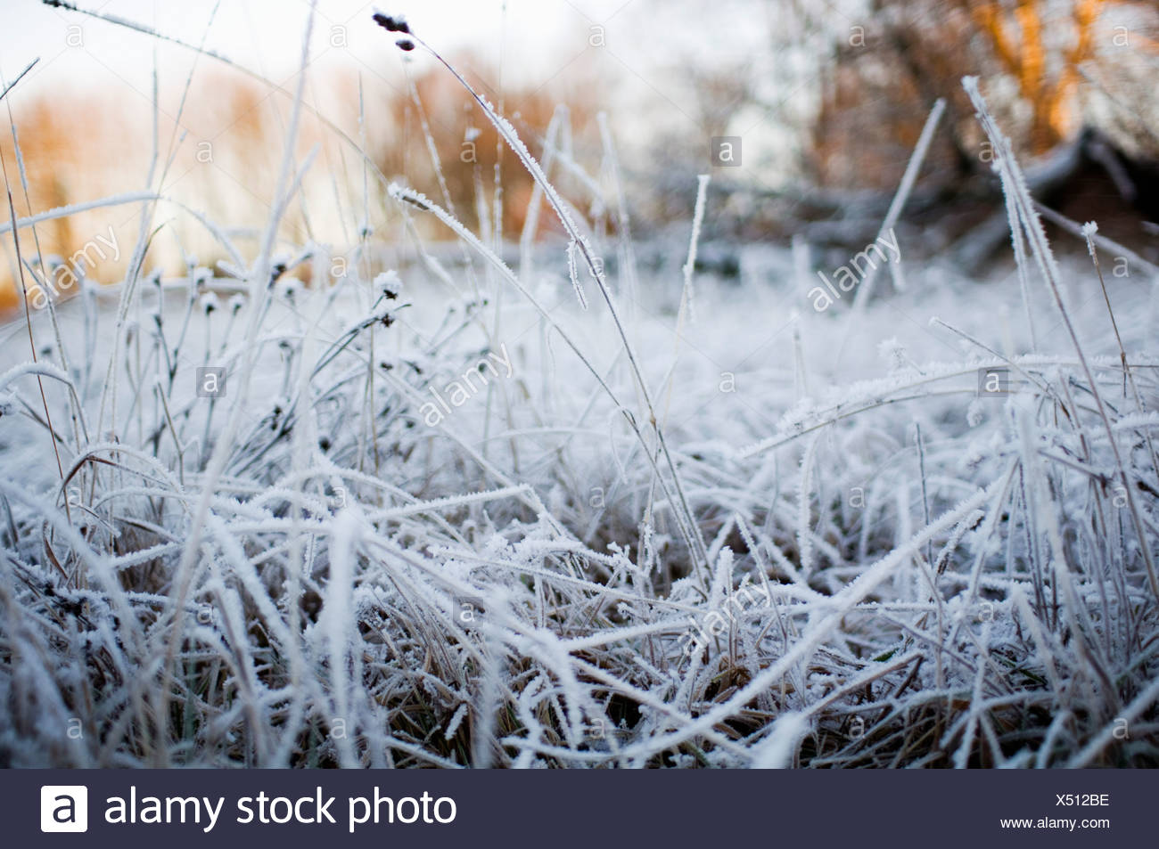 Field covered in frost Stock Photo