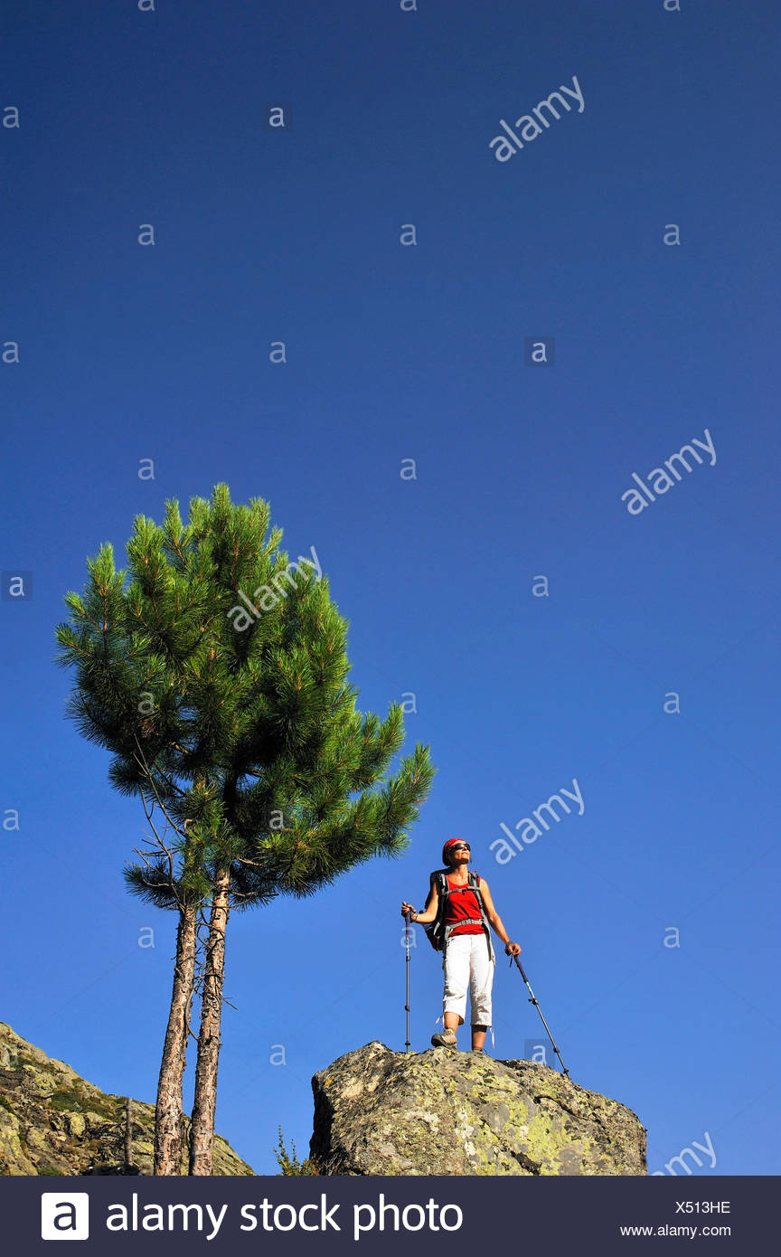 aleppo pine (Pinus halepensis), female wanderer standing on a rock and enjoying the view, France, Corsica, Pietra Piana - Stock Image