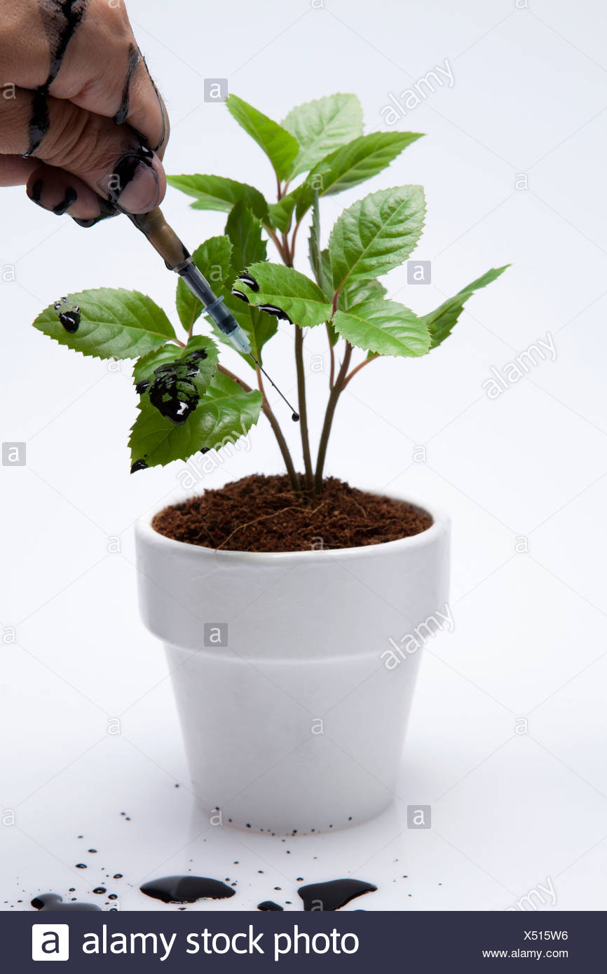 Human Holding Injection And The Plant Pot - Stock Image