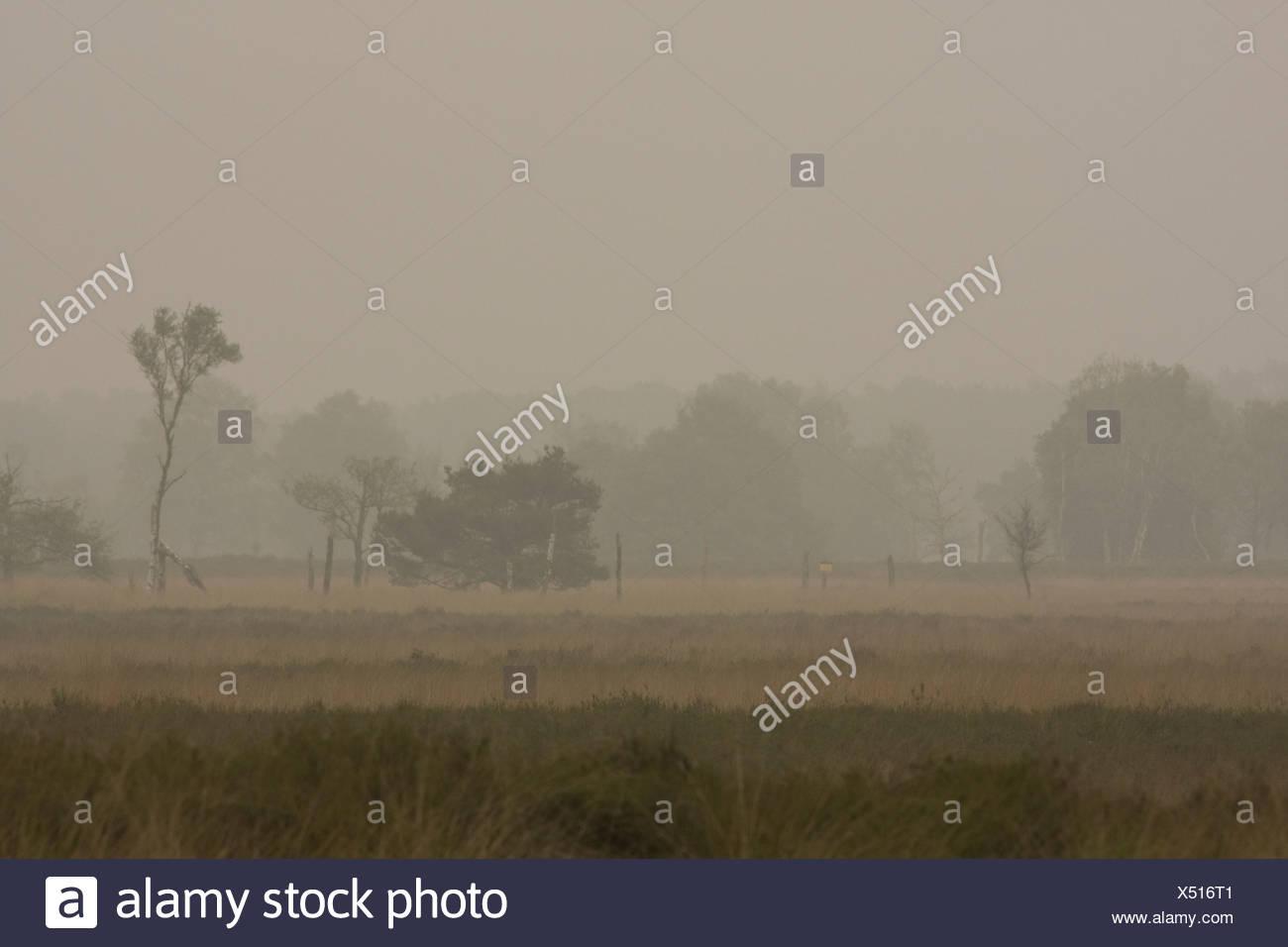 Mistig grauw typisch hollands landschap van de Kampina Stock Photo