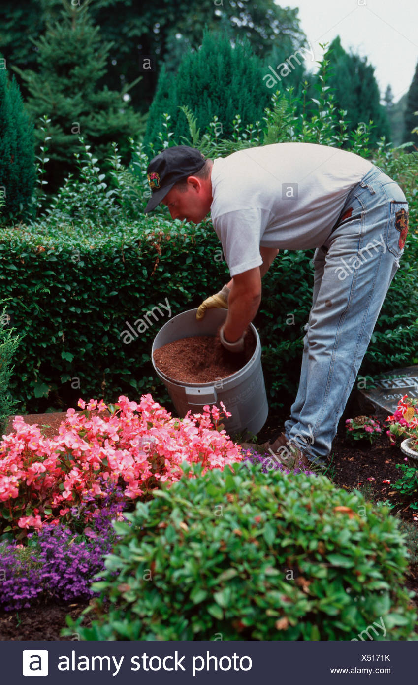 Cemetery, a gardener at the grave care Stock Photo